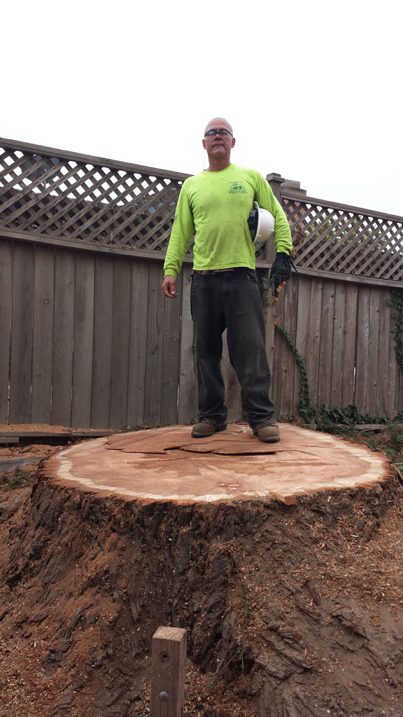 That is a Big Stump