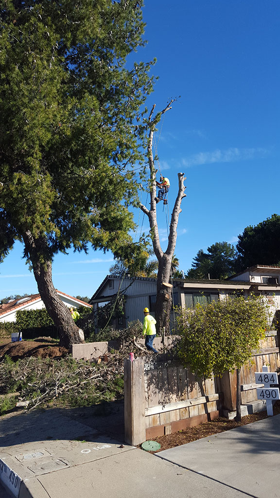 Tree Removal 2/3