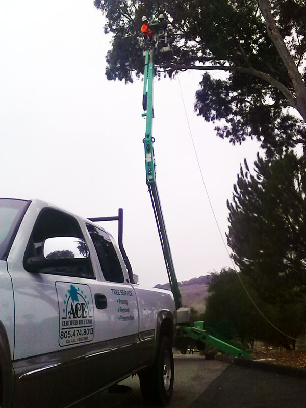 We have the equipment to do your tree work.