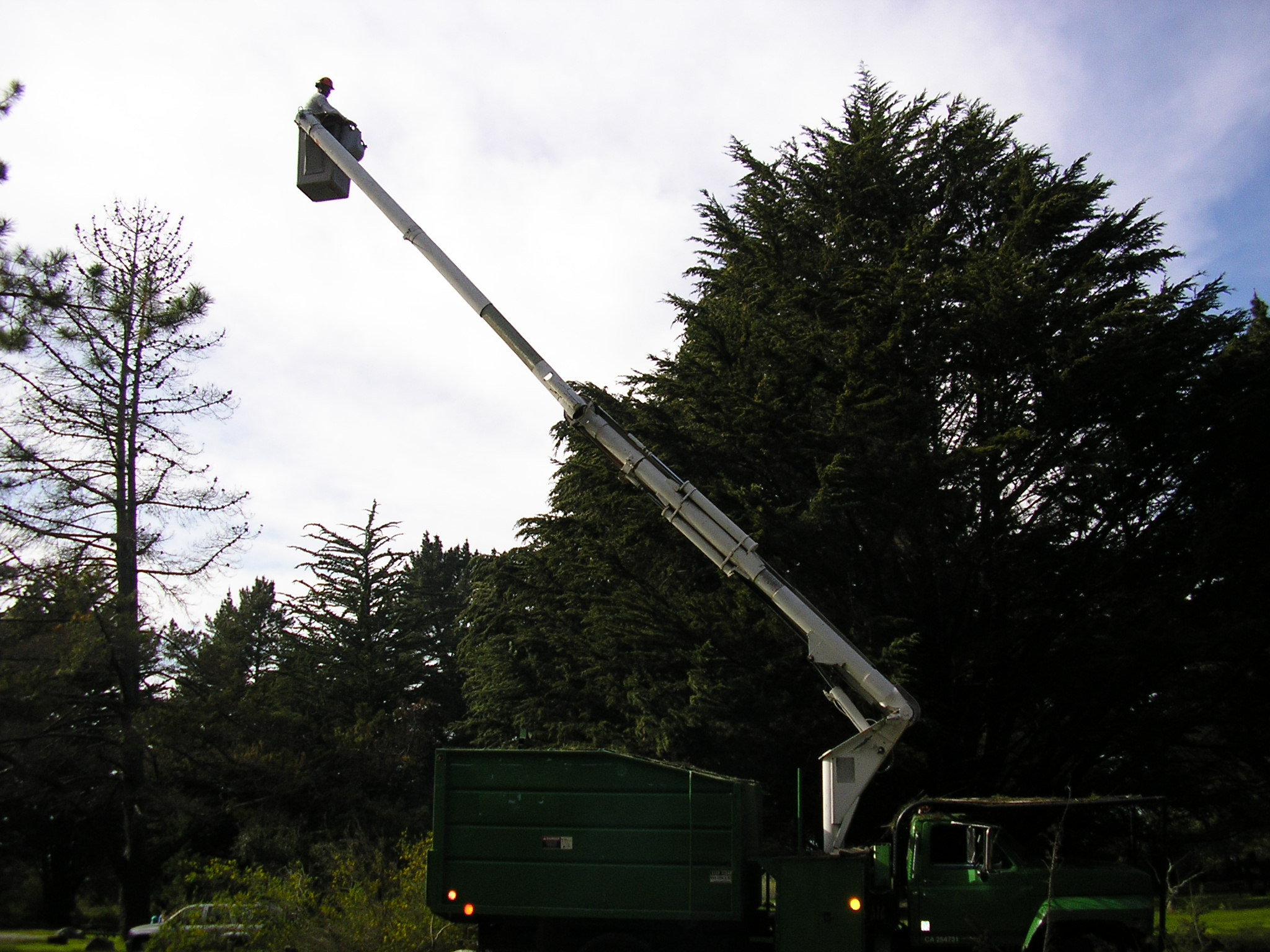 ACE Certified Tree Care ~ 75 Trees at Big Sur with Lift-Truck - No Problem!